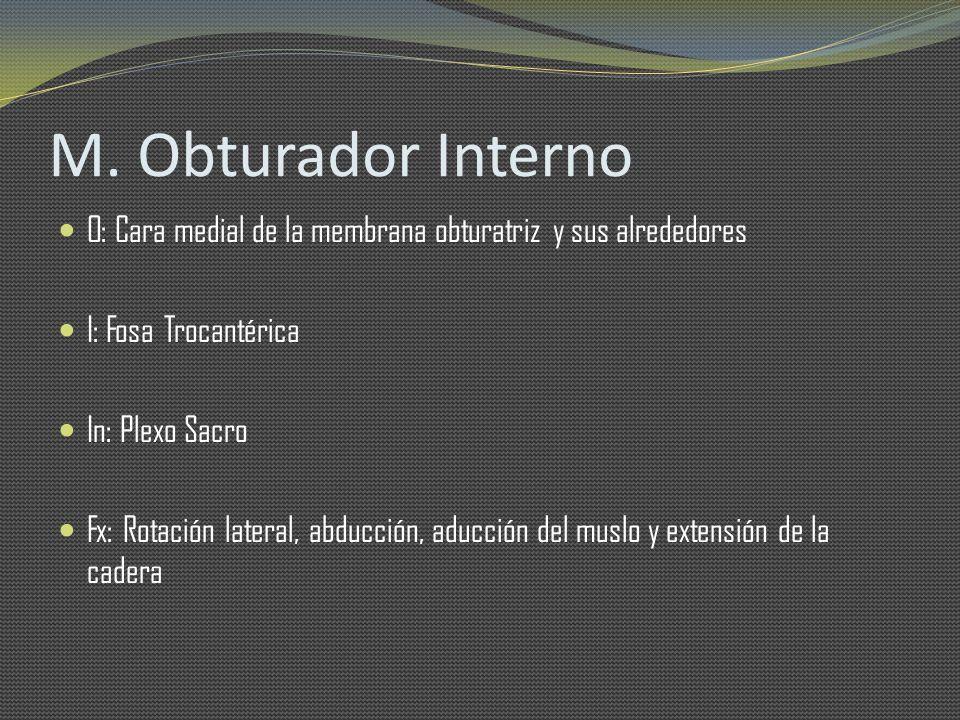 M. Obturador Interno O: Cara medial de la membrana obturatriz y sus alrededores. I: Fosa Trocantérica.