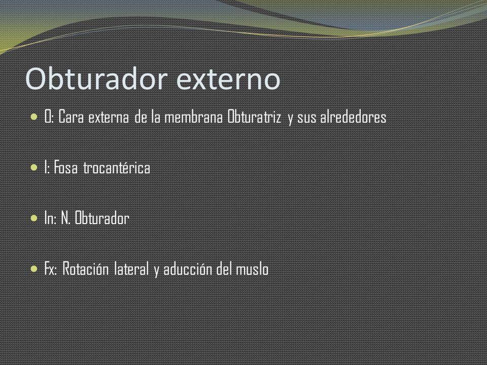 Obturador externo O: Cara externa de la membrana Obturatriz y sus alrededores. I: Fosa trocantérica.