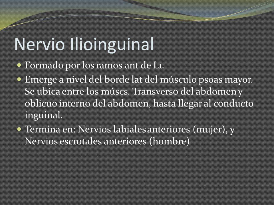 Nervio Ilioinguinal Formado por los ramos ant de L1.