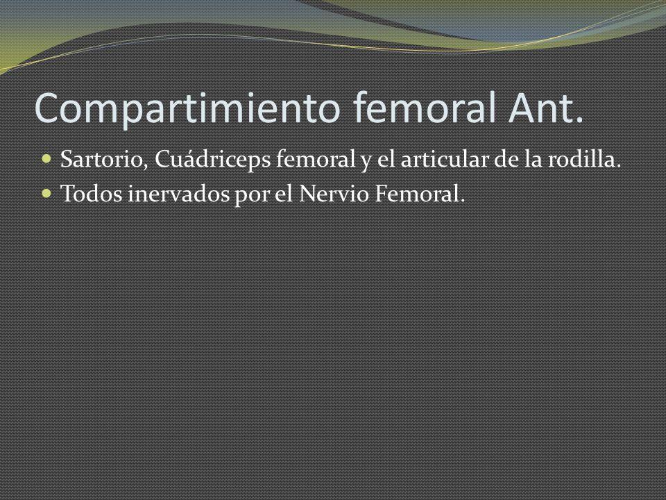 Compartimiento femoral Ant.
