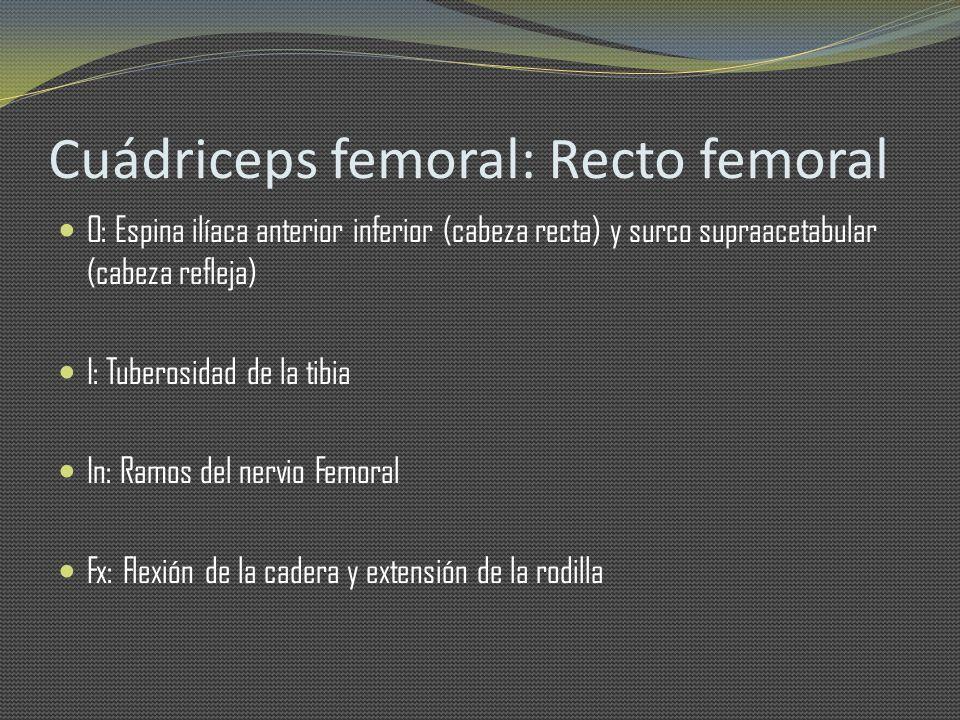Cuádriceps femoral: Recto femoral