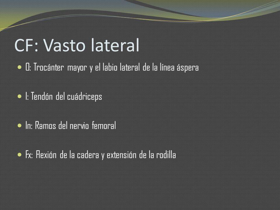 CF: Vasto lateral O: Trocánter mayor y el labio lateral de la línea áspera. I: Tendón del cuádriceps.
