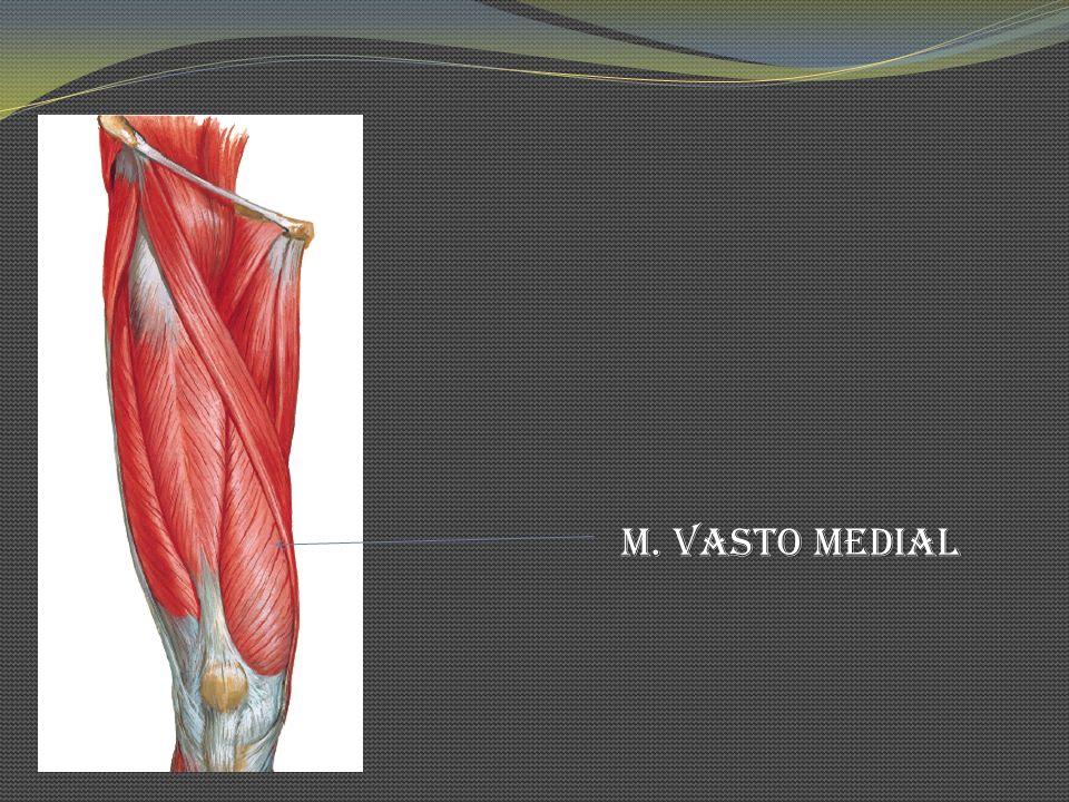 M. Vasto Medial