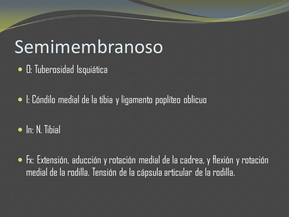 Semimembranoso O: Tuberosidad Isquiática
