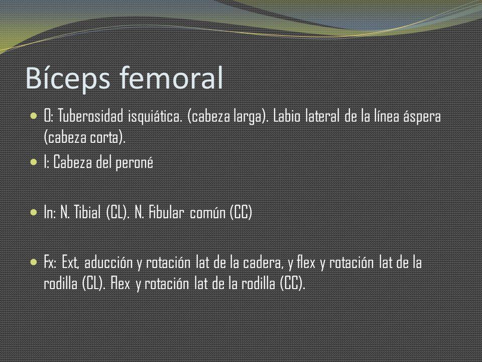 Bíceps femoral O: Tuberosidad isquiática. (cabeza larga). Labio lateral de la línea áspera (cabeza corta).