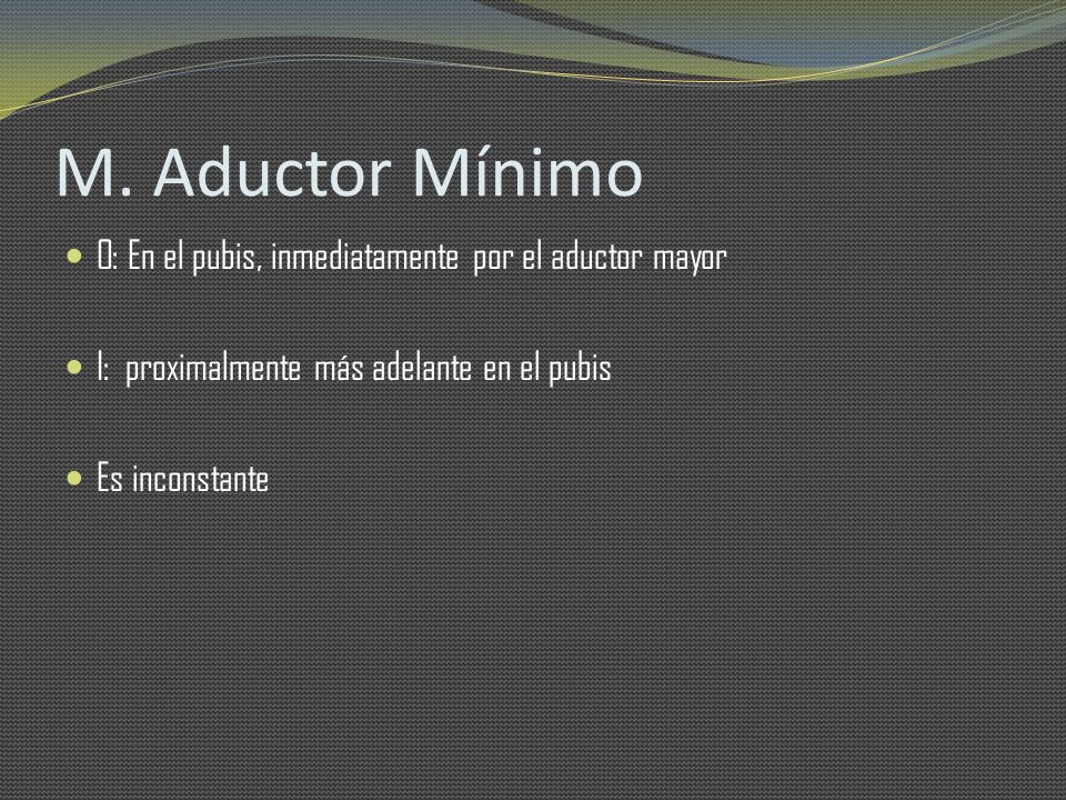 M. Aductor Mínimo O: En el pubis, inmediatamente por el aductor mayor