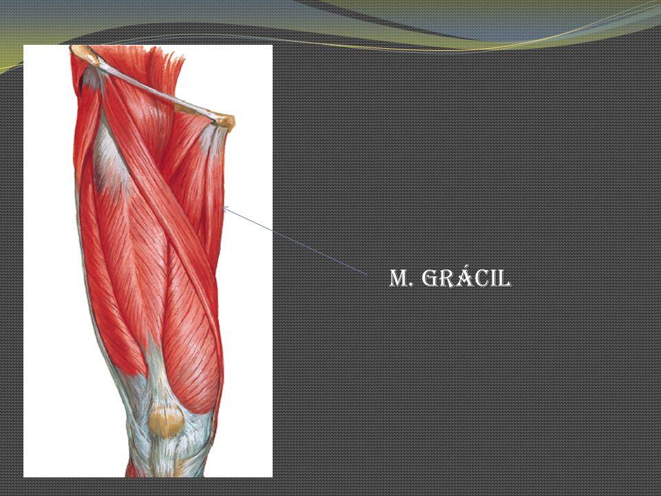 M. Grácil