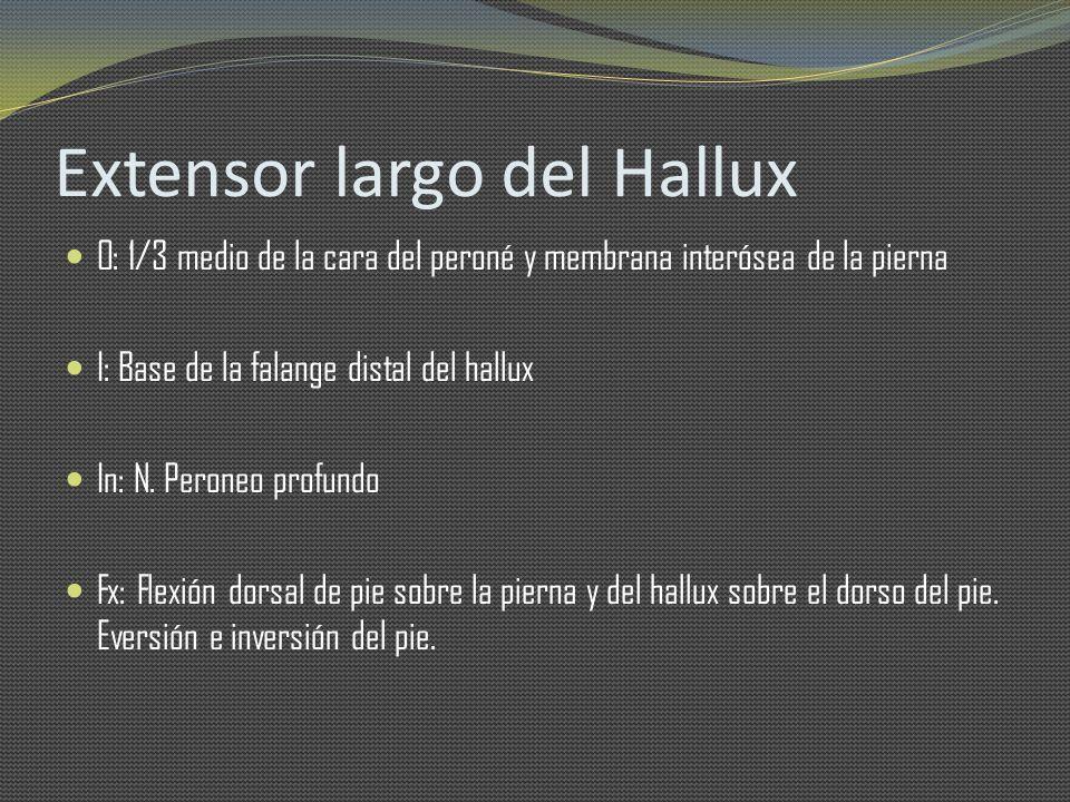 Extensor largo del Hallux