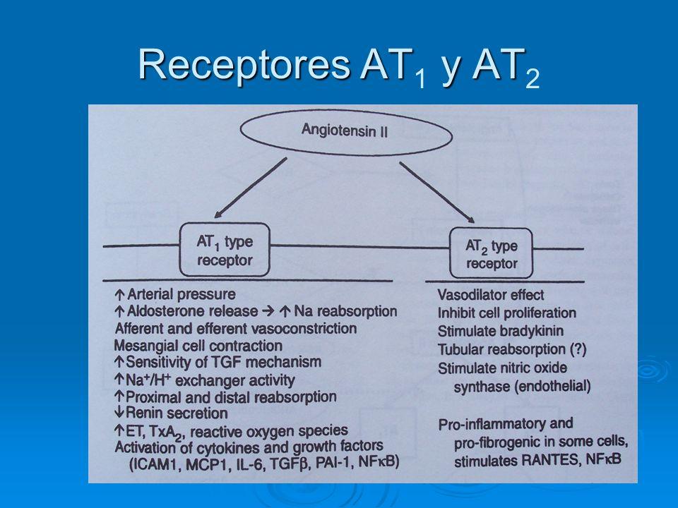Receptores AT1 y AT2