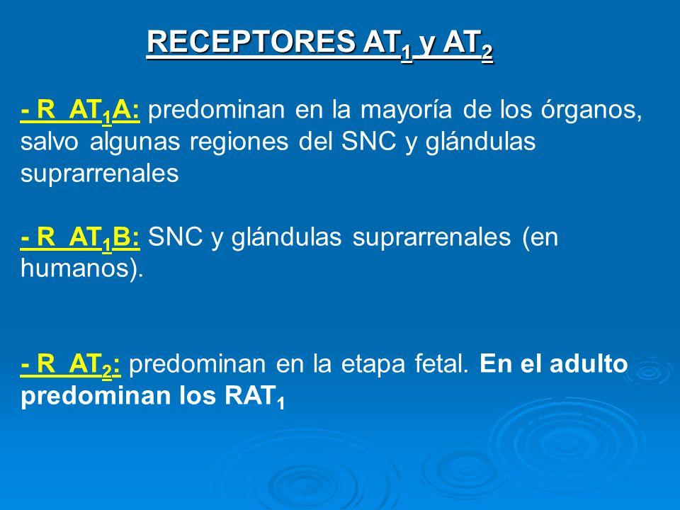 RECEPTORES AT1 y AT2- R AT1A: predominan en la mayoría de los órganos, salvo algunas regiones del SNC y glándulas suprarrenales.