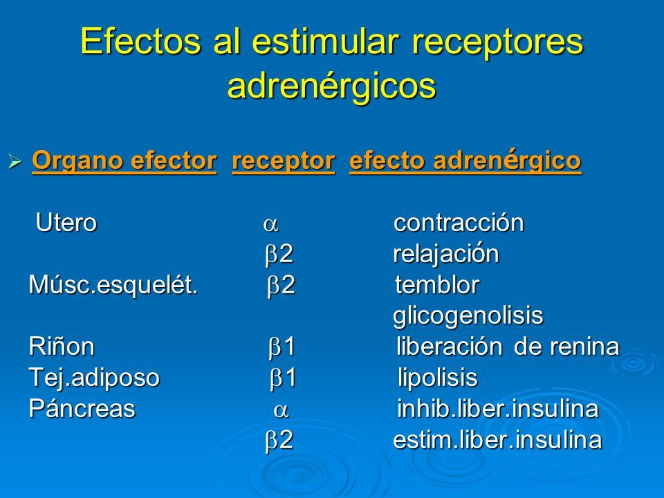 Efectos al estimular receptores adrenérgicos