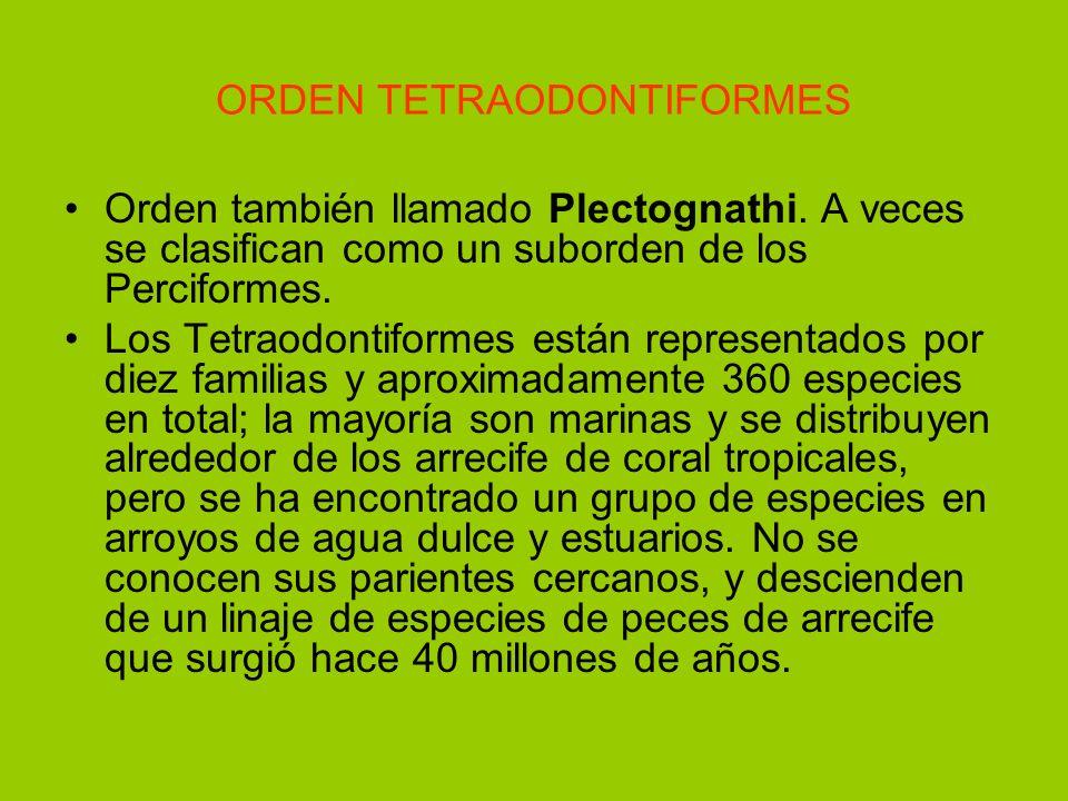 ORDEN TETRAODONTIFORMES