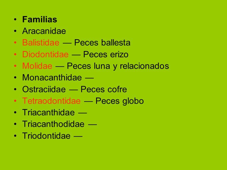 Familias Aracanidae. Balistidae — Peces ballesta. Diodontidae — Peces erizo. Molidae — Peces luna y relacionados.