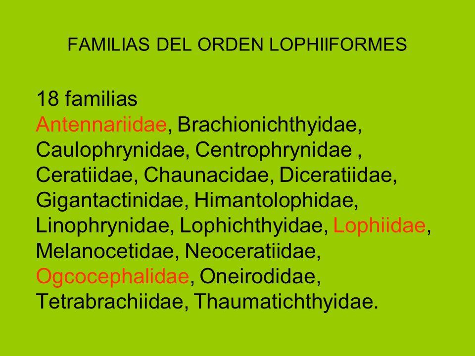 FAMILIAS DEL ORDEN LOPHIIFORMES