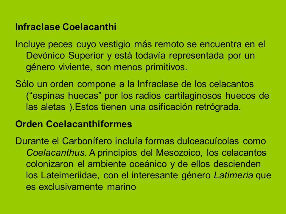 Infraclase Coelacanthi