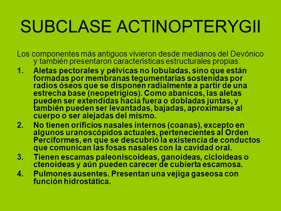 SUBCLASE ACTINOPTERYGII