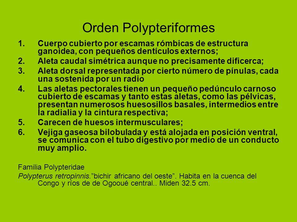 Orden Polypteriformes