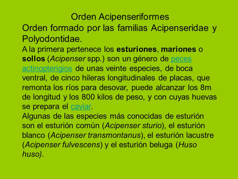 Orden Acipenseriformes