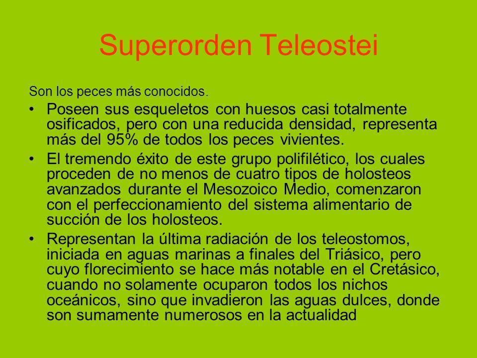 Superorden Teleostei Son los peces más conocidos.
