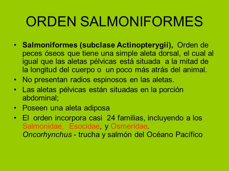 ORDEN SALMONIFORMES