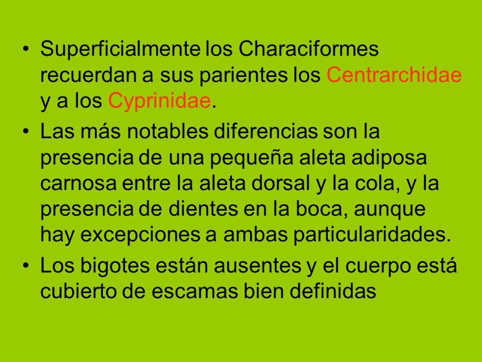 Superficialmente los Characiformes recuerdan a sus parientes los Centrarchidae y a los Cyprinidae.