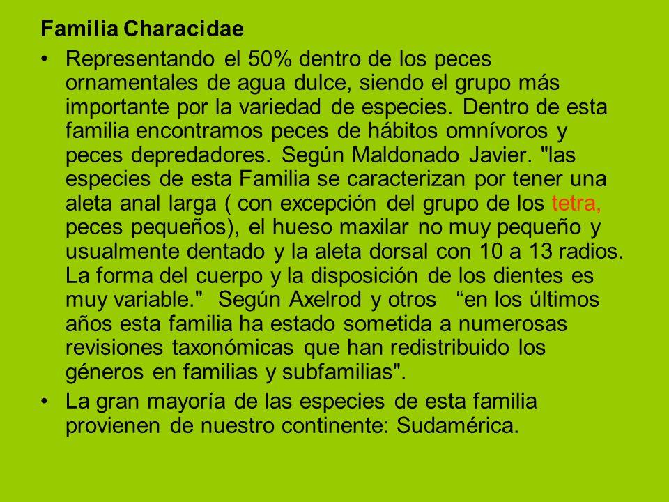 Familia Characidae