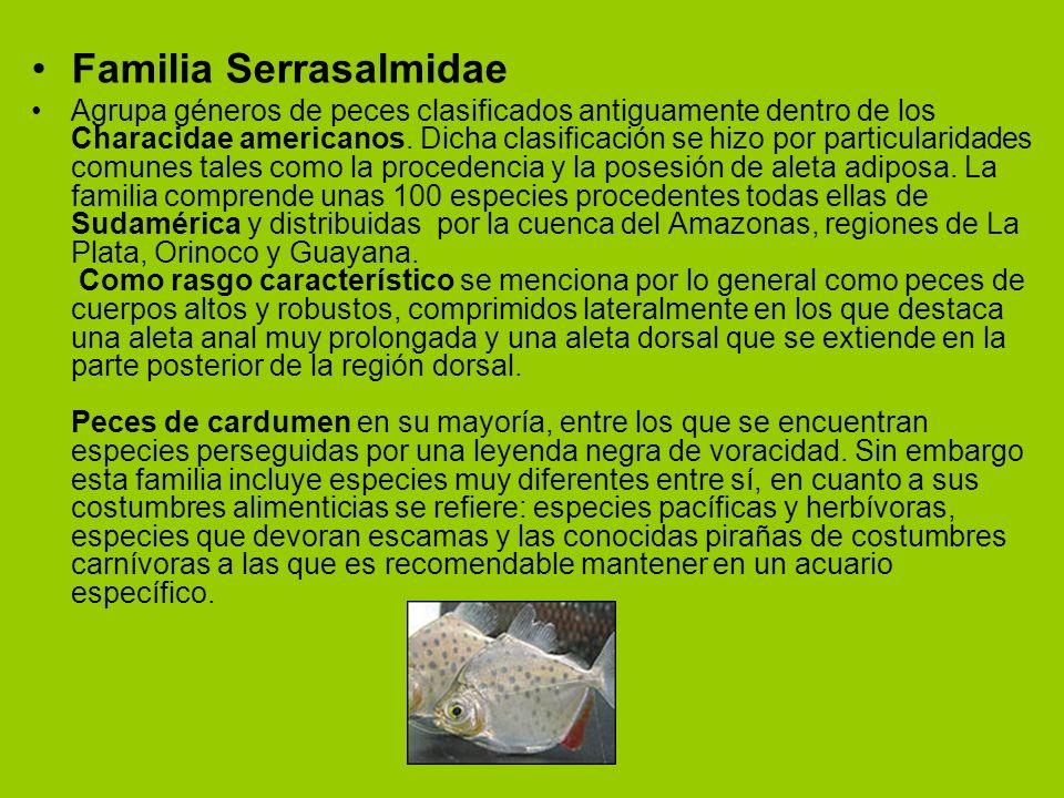 Familia Serrasalmidae