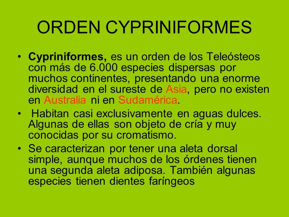 ORDEN CYPRINIFORMES