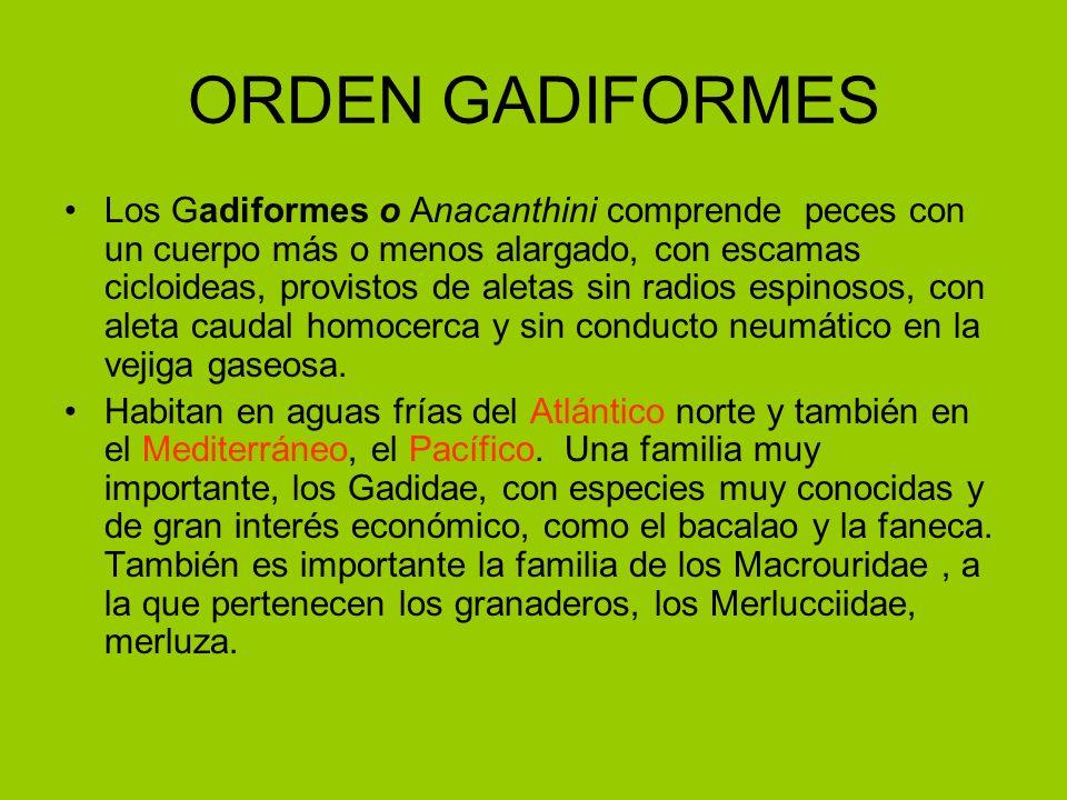 ORDEN GADIFORMES