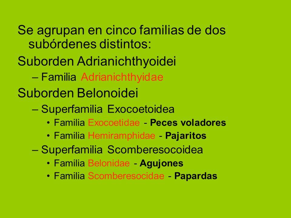 Se agrupan en cinco familias de dos subórdenes distintos: