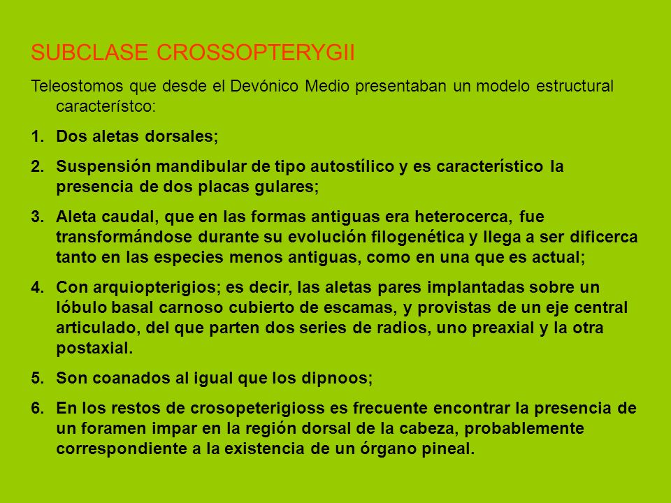 SUBCLASE CROSSOPTERYGII