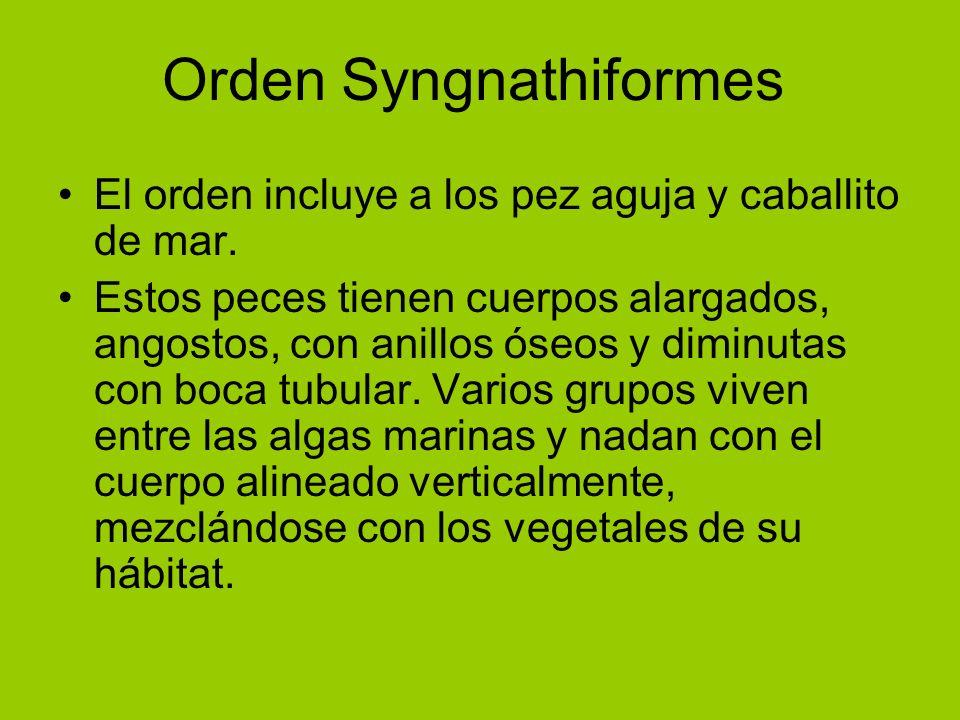 Orden Syngnathiformes