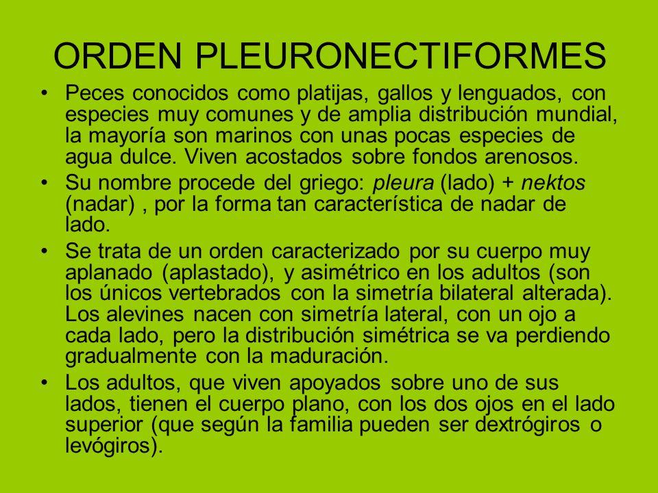 ORDEN PLEURONECTIFORMES