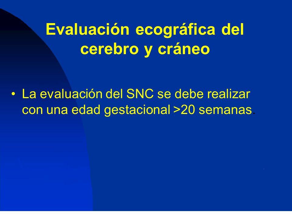 Evaluación ecográfica del cerebro y cráneo