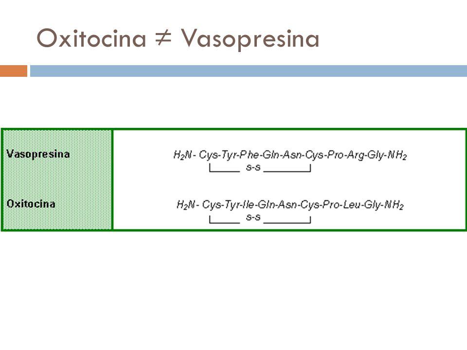 Oxitocina ≠ Vasopresina