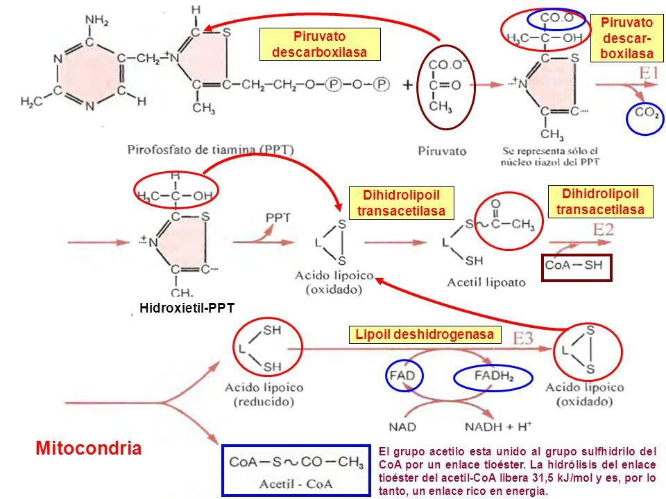 Lipoil deshidrogenasa
