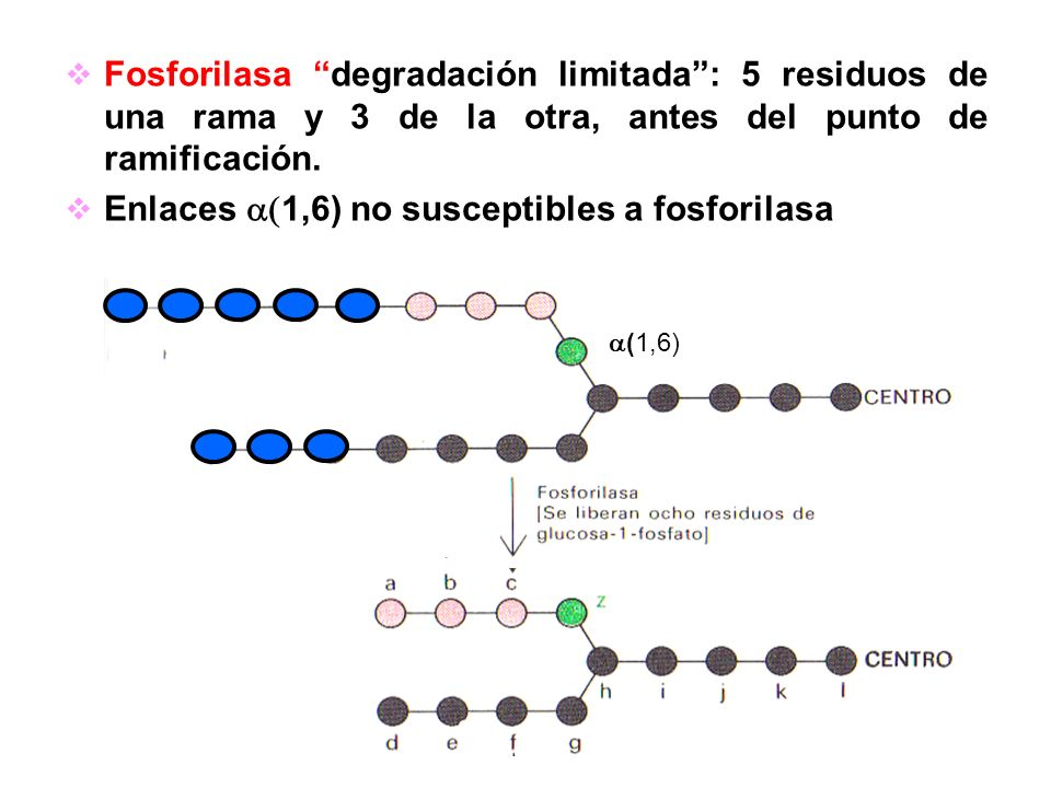 Enlaces a(1,6) no susceptibles a fosforilasa