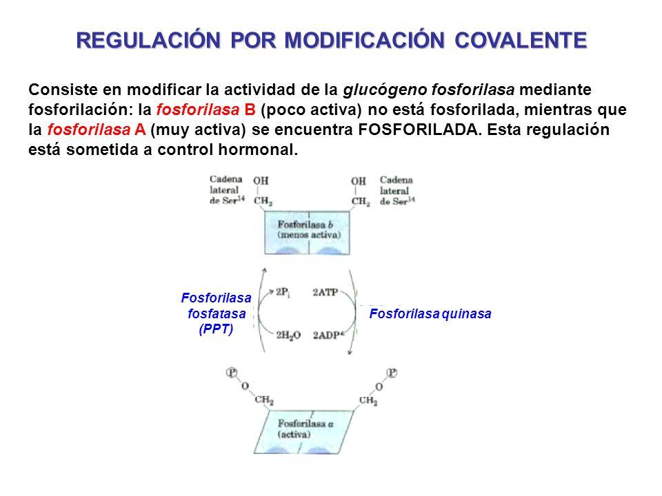 REGULACIÓN POR MODIFICACIÓN COVALENTE