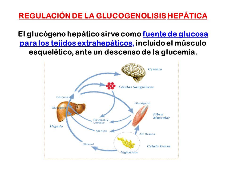 REGULACIÓN DE LA GLUCOGENOLISIS HEPÁTICA