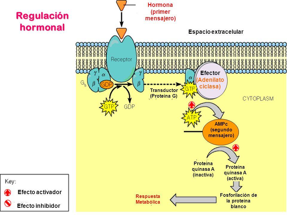 Fosforilación de la proteína blanco