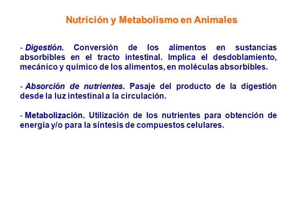 Nutrición y Metabolismo en Animales