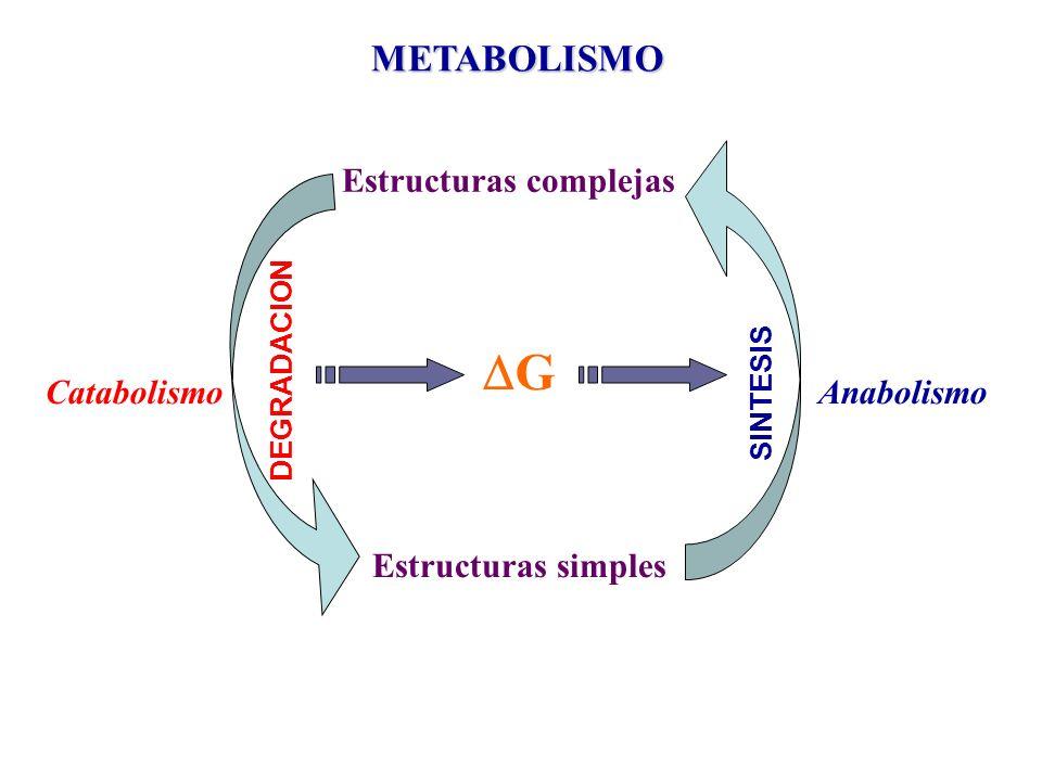 G METABOLISMO Estructuras complejas Estructuras simples Catabolismo