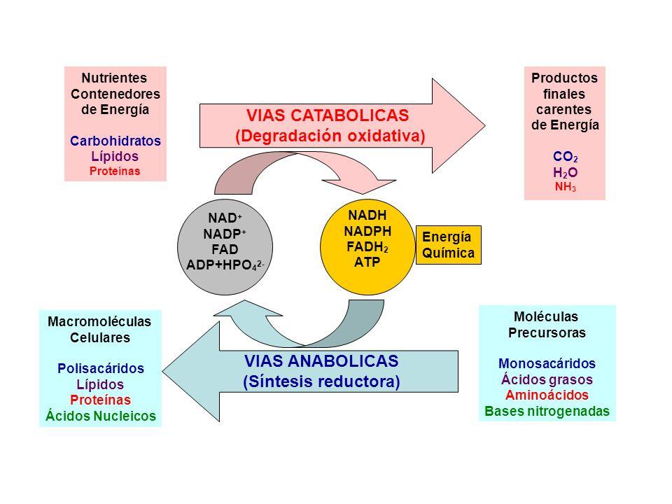 (Degradación oxidativa)