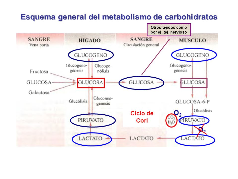 Esquema general del metabolismo de carbohidratos