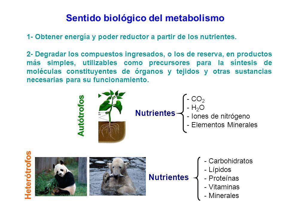 Sentido biológico del metabolismo