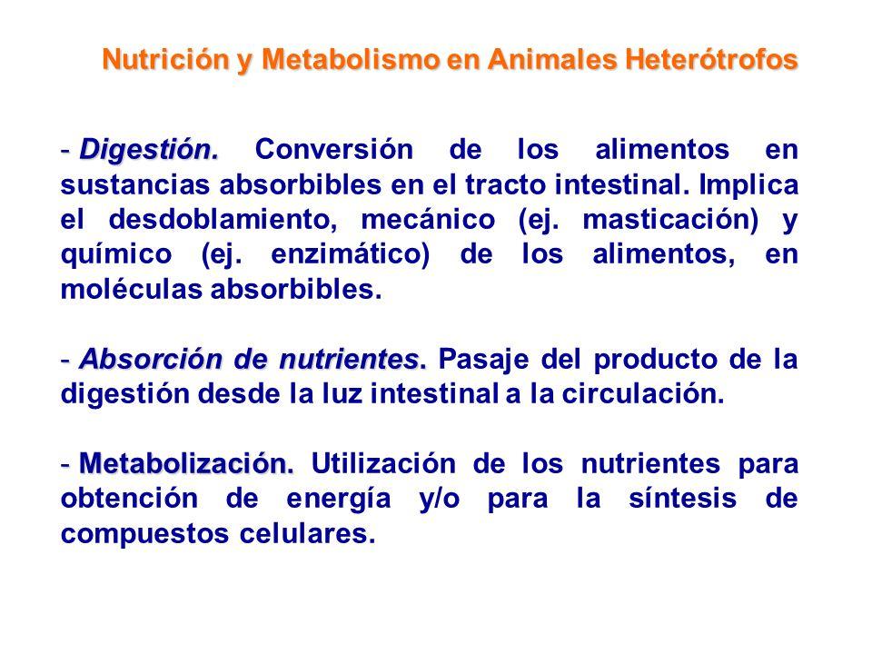 Nutrición y Metabolismo en Animales Heterótrofos