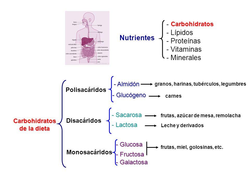 Carbohidratos Lípidos Proteínas Vitaminas Nutrientes Minerales