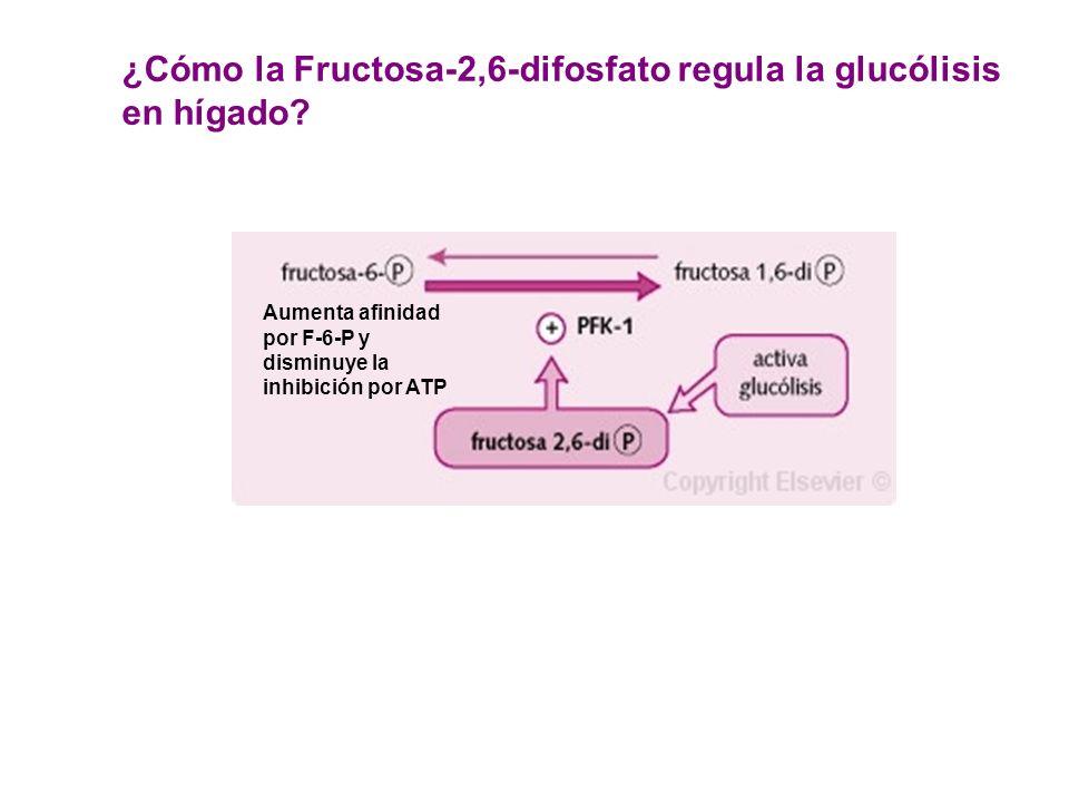 ¿Cómo la Fructosa-2,6-difosfato regula la glucólisis en hígado