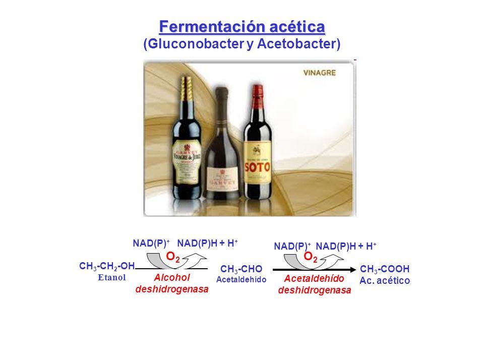 (Gluconobacter y Acetobacter)