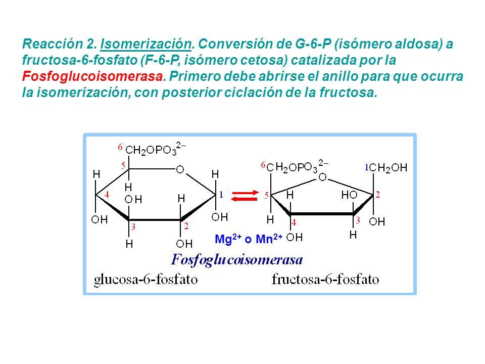 Reacción 2. Isomerización